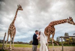 wedding photography Melbourne- Werribee Zoo